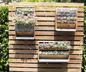 Tiato garden detail