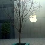 Apples still grows on trees