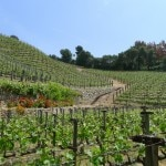 moraga estate 150x150 Moraga Vineyards 2005 Red   Wine of the Week Review