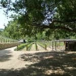 moraga vineyards 150x150 Moraga Vineyards 2005 Red   Wine of the Week Review