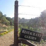 Wente garden 150x150 Wente Vineyards Celebrates National Chardonnay Day
