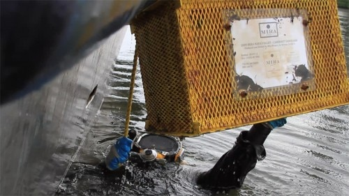A diver retrieves a crate of Mira Winery 2009 Cabernet Sauvignon from Charleston Harbor