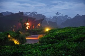 View of the Nyungwe Forest Lodge