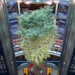 The atrium on the Celebrity Solstice