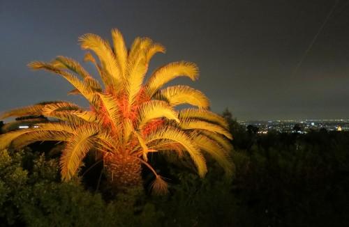Garden David Arquette