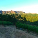 Jericho Canyon Vineyard with the Palisades in the background