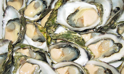 oysters Aw, Shucks! It's National Oyster Day