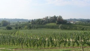 A view of the vines from Masottina Winery