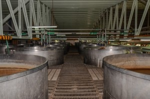 Some of Herradura's fermentation tanks—Herradura relies on naturally-occurring fermentation