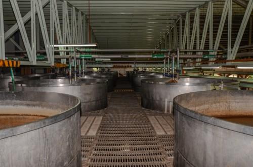 Some of Herradura's fermentation tanks—Herradura relies on naturally-occurring fermentation