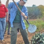 jeff hoyt cleaning agave 150x150 Farm to Tequila: A Visit to Casa Herradura