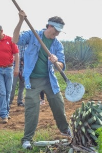Jeff Hoyt cleans agave with a traditional coa
