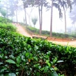 rilhena landscape 150x150 Dilmah Tea — Review