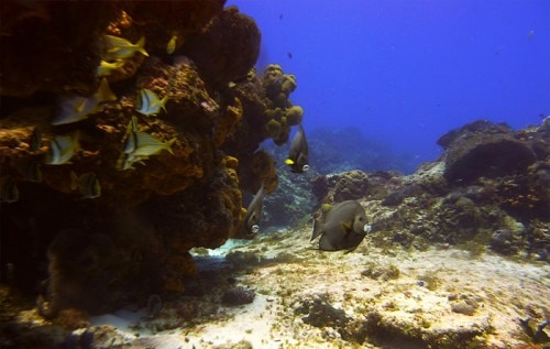 scuba diving cozumel1 500x317 Top 7 Things to Do on Mexicos Riviera Maya