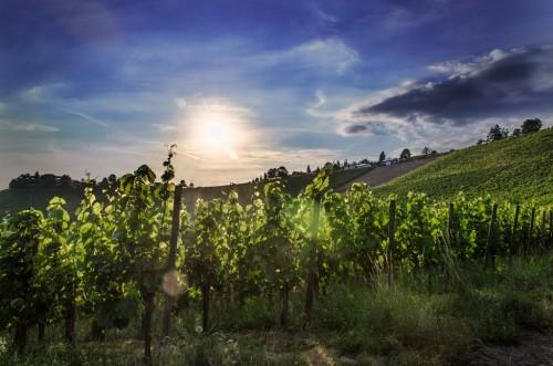 Stuttgart vineyards