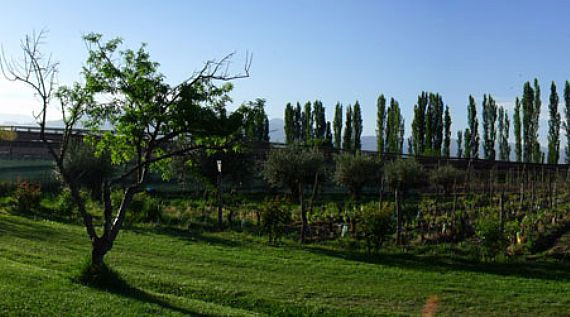 The lush vineyards of Achaval-Ferrer in Mendoza, Argentina