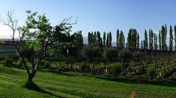 The lush vineyards of Achaval-Ferrer in Mendoza, Argentina