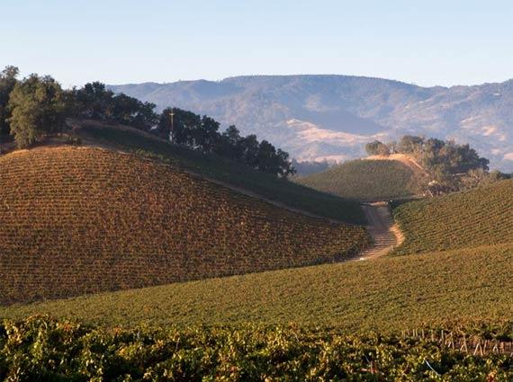 Justin Vineyards in Paso Robles, California