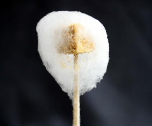 Andrés foie gras cotton candy
