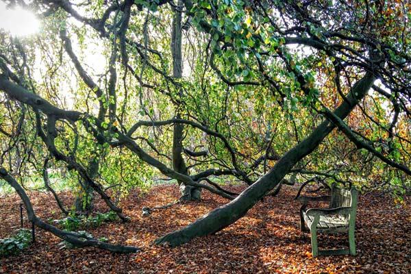 Photo courtesy of Kew Royal Botanic Gardens