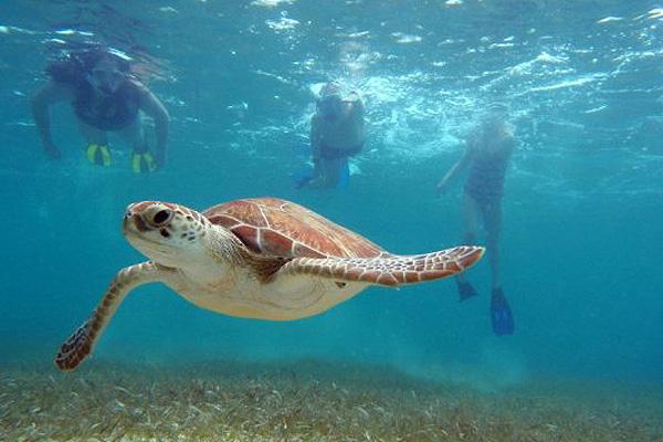 Sea turtles are a common sight at Akumal