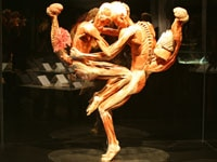 Body Worlds Plastinates