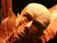Body Worlds Plastinate