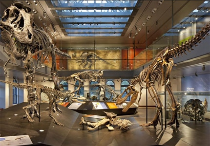 Peruse the current exhibits at the Natural History Museum