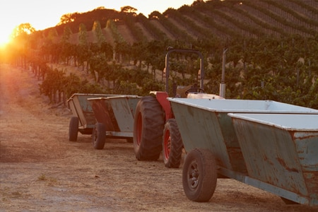 Harvest Wine Weekend in Paso Robles, CA