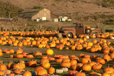 Pick a pumpkin to take home from the patch at the Half Moon Bay Art & Pumpking Festival