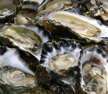 Oysters are the classic aphrodisiac - Casanova at 50 a day!