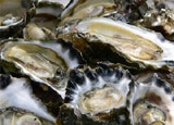 Oysters, one of GAYOT's Top 10 Romantic Foods