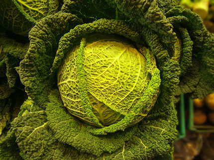 All varieties of cabbage are high in nutritional value