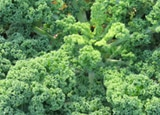 Kale, one of our Top 10 Superfoods