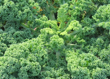 Kale is full of calcium, vitamin B6 and lutein
