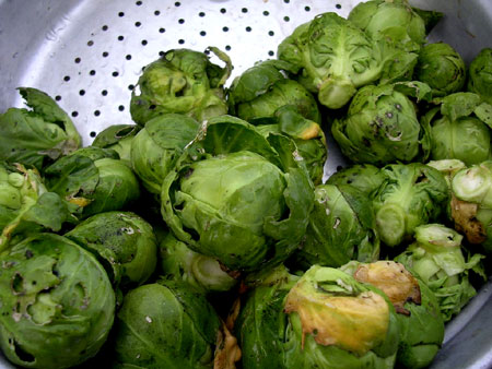 These roasted Brussels sprouts shine thanks to honey, lemon juice and fresh thyme
