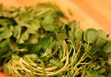 Watercress is full of health benefits, including impressive cancer fighting properties
