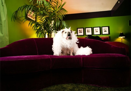 Pets are pampered at The Heathman Hotel, one of GAYOT's top dog-friendly hotels in Portland, Oregon