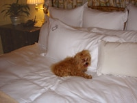 A relaxed canine at The Peninsula Beverly Hills