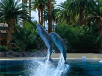 The dolphin habitat at The Mirage in Las Vegas, NV