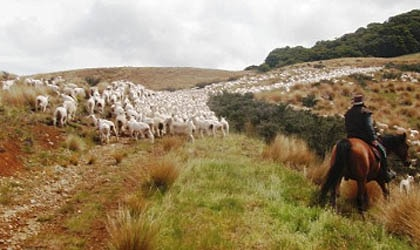 Herding at Beaumont High Country Experience in Otautau, Southland, Australia