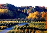 Chateau Chantal, one of our Top 10 Wine Country Inns in the U.S.