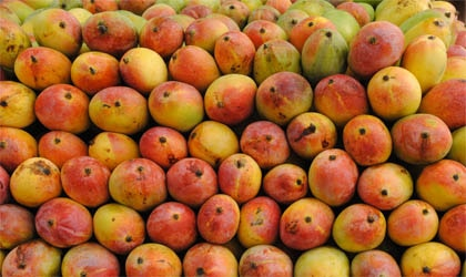 Mangos are rich in antioxidant cartenoids like Vitamin C