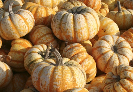 Pumpkins are not just decorative — their seeds have been shown to reduce cholesterol