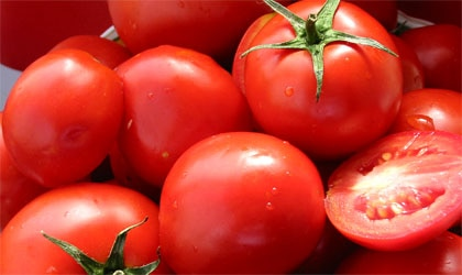The tomato's omnipresence in world cooking has also enhanced health by delivering a rare nutritional component: lycopene