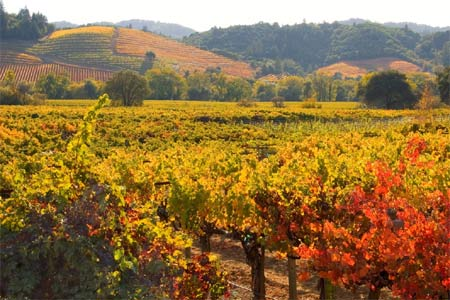 Experience a taste of Dry Creek Valley at this grand tasting produced by WineLA