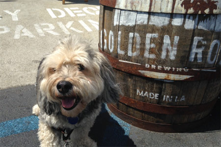 Families with dogs in tow flock to the patios at The Pub at Golden Road in Los Angeles