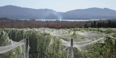 Netting to protect the vineyards from birds