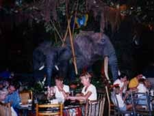 Dining Room at Rainforest Cafe, Chicago, IL