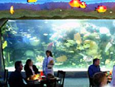 Aquarium, Nashville, TN